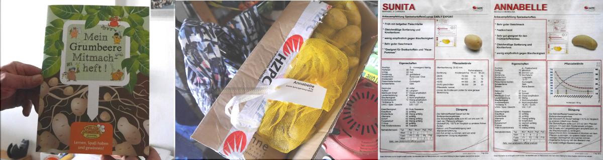 Kartofel-Projekt am TMG